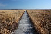 秋のサロベツ原野