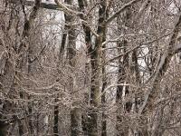 林の中で小鳥の鳴き声が