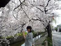 玉串川の桜01