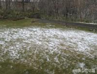芝生の上の雪