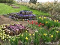 春爛漫の花壇
