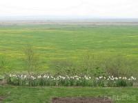 宿の庭から見る牧草地のタンポポ