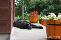玄関前で昼寝