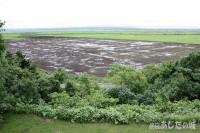 大雨の後の牧草地