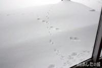 テンとネズミの足跡