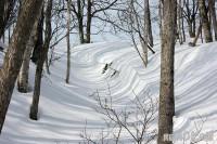 雪に映える木立の影