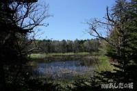 原始砂丘林の沼