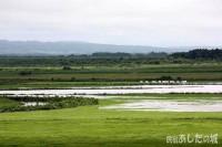 牧草地が冠水