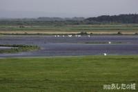 牧草地の冠水