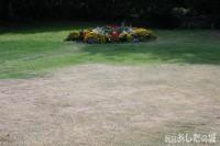 水不足の芝