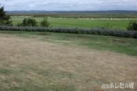 水不足の芝その2