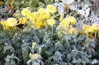 葉っぱについた霜の模様がきれい