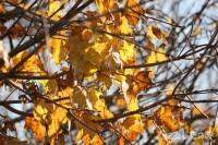 葉が散っていく