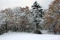 紅葉した葉に雪が積もる