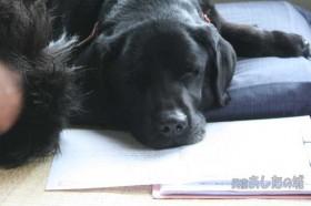 睡眠学習??