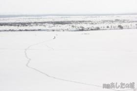 牧草地の上を散歩