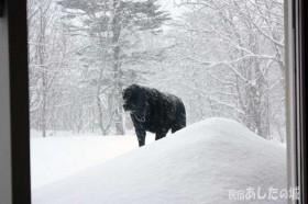 雪が降る中を歩くのんた君