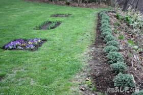 キャットミントと芝生