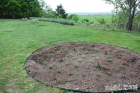 植えたばかりの花壇