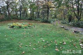 落ち葉がたまった芝生
