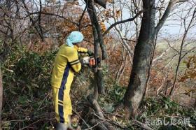 倒木の撤去