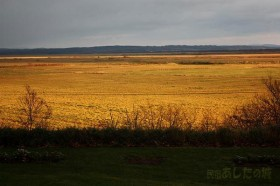 輝く牧草地