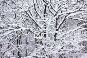 雪が積もった枝