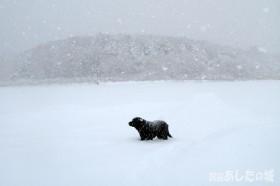 腹まで雪に埋まるのんた君