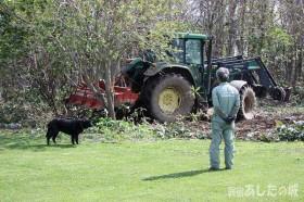 ササを掘り起こす