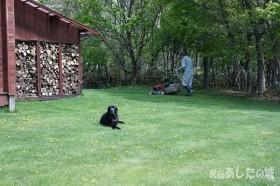 芝刈りする宿主とのんた君