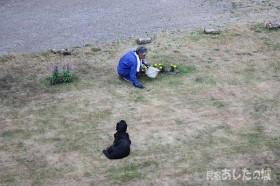 7月8日の芝生