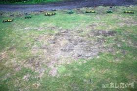 7月12日の芝生