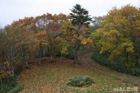 木々の紅葉と落葉