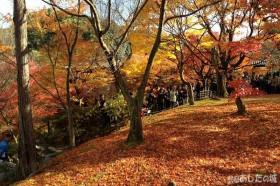 京都、東福寺の紅葉