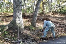 木の根を割る