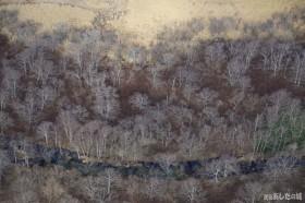 サロベツ川と灌木