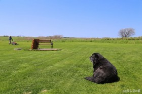 芝刈りする宿主を見守るのんた君