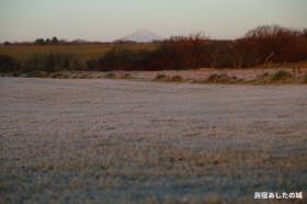 11日朝の霜