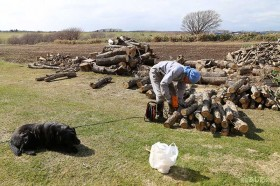 シイタケの榾木作り