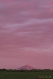 おお利尻もピンク色~!