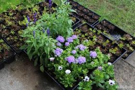 丸い花壇に植えるもの