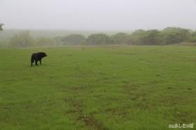 霧の中ののんた!
