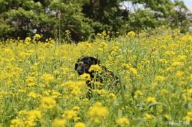 お花畑の、のんちゃん