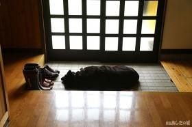 玄関でお昼寝…