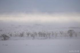 原野の地吹雪
