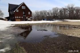 裏庭に春水出現