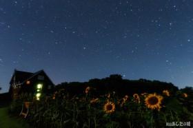 ヒマワリと星空