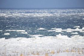 稚内の流氷