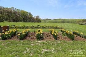 水仙を減らして宿根草を植える