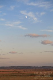 サロベツ原野と月